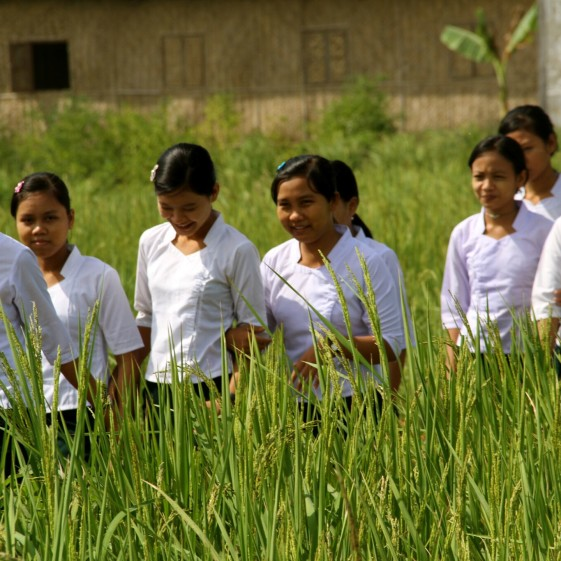 Students walking through a paddy field